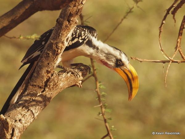 Traveling Kenya Samburu Safari Photos